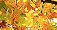 Autumn Colour at Exbury Gardens