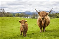 COOS & CASTLES The Rhins of Galloway